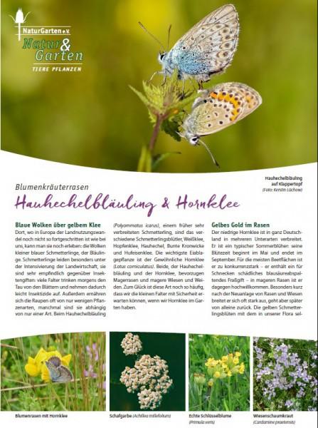 Natur&Garten 1/2017A Hauhechelbläuling und Hornklee