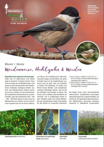 Natur&Garten 1/2017A Weidenmeise, Hohlzahn und Weiden