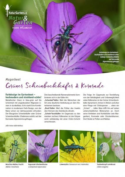 Natur&Garten 1/2017A Grüner Scheinbockkäfer und Kornrade