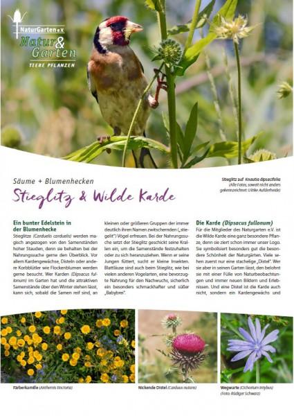Natur&Garten 1/2017A Stieglitz und Wilde Karde