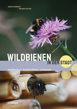 Wildbienen in der Stadt - entdecken, beobachten, schützen