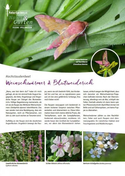 Natur&Garten 1/2017A Weinschwärmer und Blutweiderich