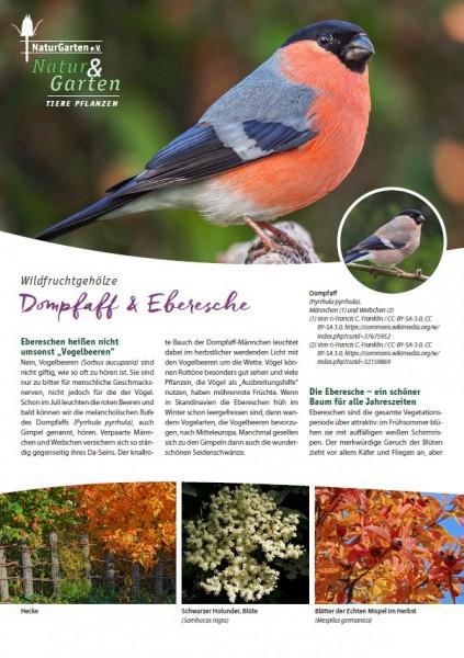 Natur&Garten 1/2017A Dompfaff und Eberesche